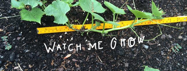 Garden Math Activities for Kids image