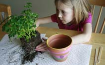 Girl planting herbs