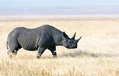 ARTICLE | Reconsidering Rhino Horn