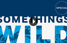 Watch | Somethings Wild