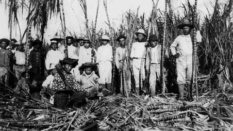Hawaii cane workers