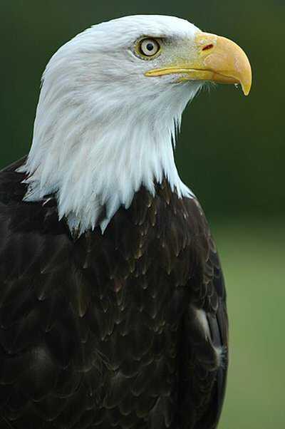 Earth Eagle 500.jpg