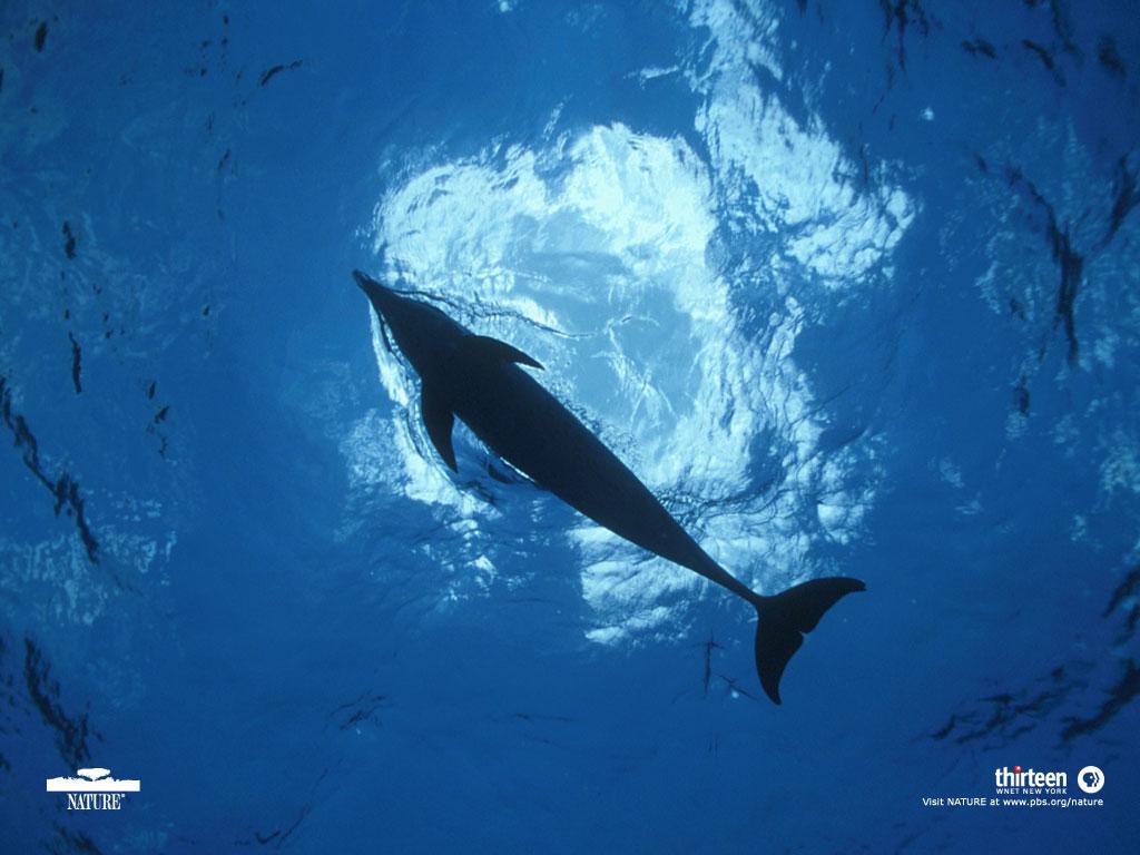 Dolphin Defender Wallpaper