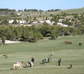 Range with horses