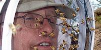 Animals Behaving Worse - America's Least Wanted: Invasive Species Wreak Havoc | Nature | PBS