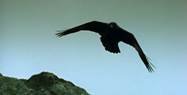 Flying raven
