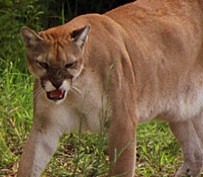 The Top Ten Things You Need To Know To Date A Cougar