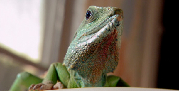 An introduction to the nature of reptiles