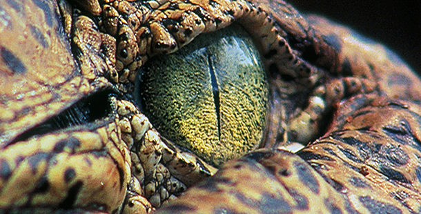http://www-tc.pbs.org/wnet/nature/files/2008/10/610_thereptiles_intro.jpg