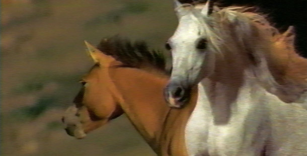 Horses - Introduction | Nature | PBS