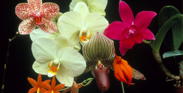 Obsession with Orchids - Introduction | Nature | PBS