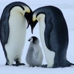 bornwild-penguin-1024x768