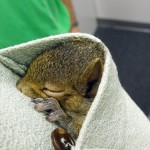 WINNER - Baby Squirrel