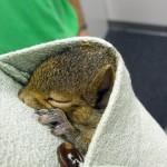 WINNER - Baby Squirrel