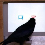 A crow is tested on its reasoning ability at the Konrad Lorenz Institute in Austria.