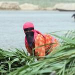 A Marsh Arab woman unloads freshly cut reeds in a healing habitat.