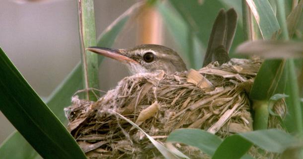 warbler-post