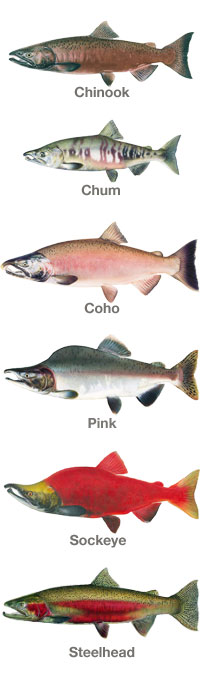 salmontypes