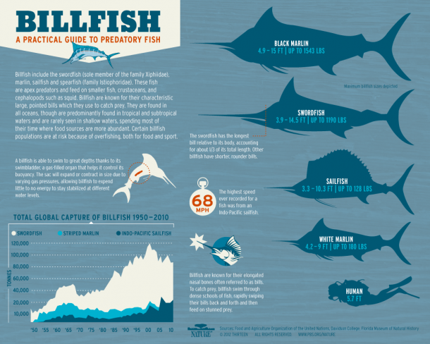 Infographic: All About Billfish, PBS Nature