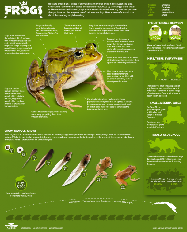 Infographic: All About Frogs, PBS Nature