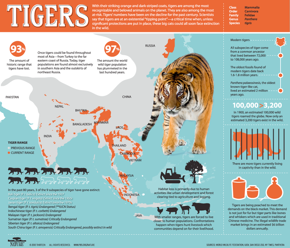 Tigers, PBS Nature