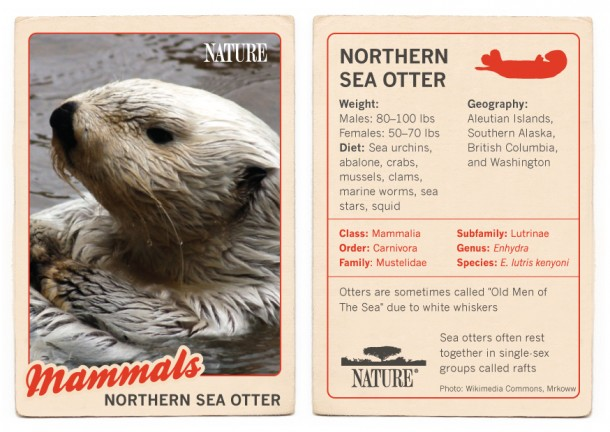 Northern-Sea-Otter-Trading-Card-1