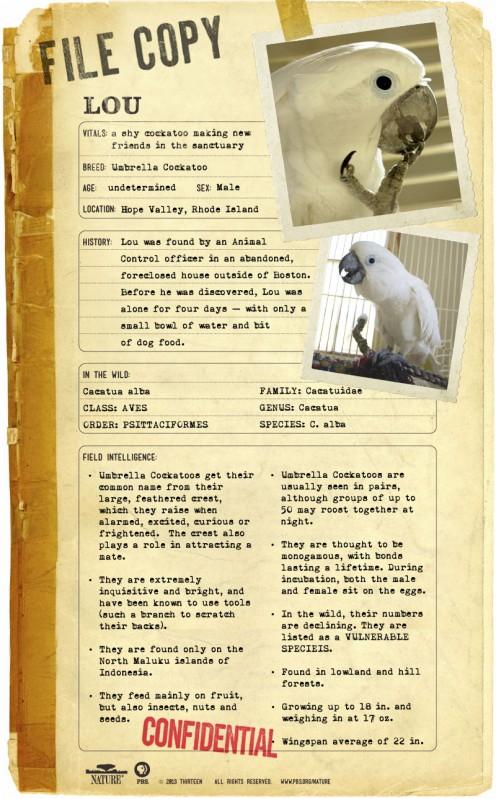 Parrot-Confidential-Lou