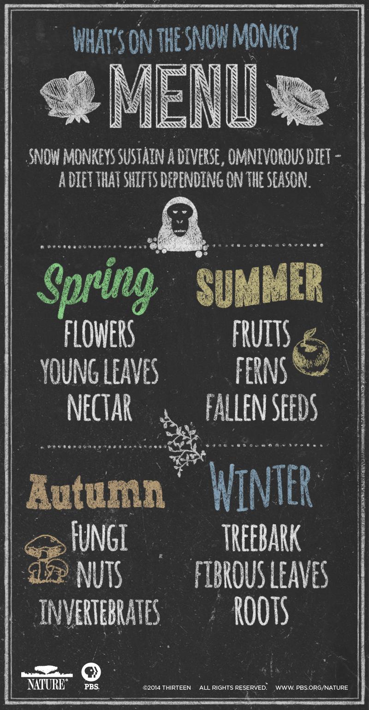 snowmonkey-infographic