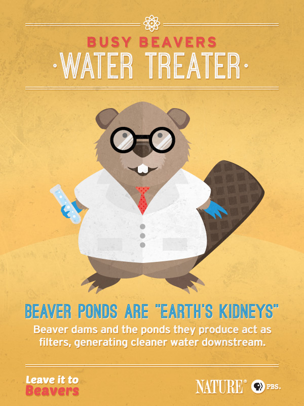 Leave it to Beavers: Water Treater