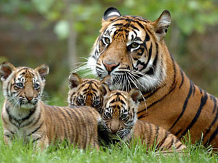 revitalization of endangered species essay Endangered species is the population of organisms which are at a risk of becoming extinct because either they are very few in number or are threatened by changing environmental or predation parameters.