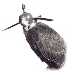 A hooded falcon. Photo (c) Jill Kokesh