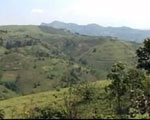 Green rolling hills in rural eastern Congo.