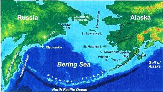 Pbs Harriman Vera Alexander The Bering Sea Ecosystem