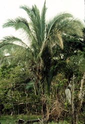 Journey Into Amazonia Powerful Plants