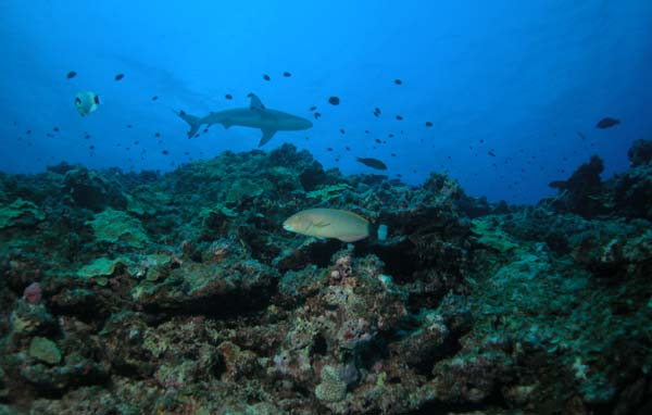 coralreef carcass