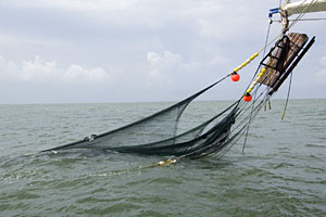 net hangs off fishing trawler into green water