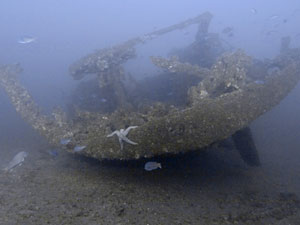 boat hull on seafloor provides a home for various forms of sealife, including a starfish
