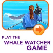Play The Whale Watcher Game!