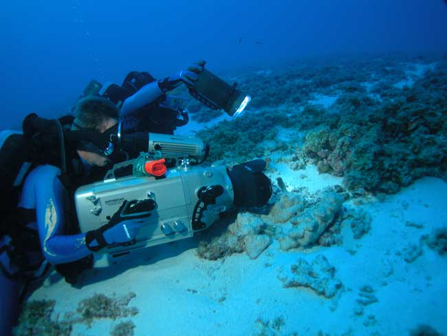 filming a close-up of a coral head
