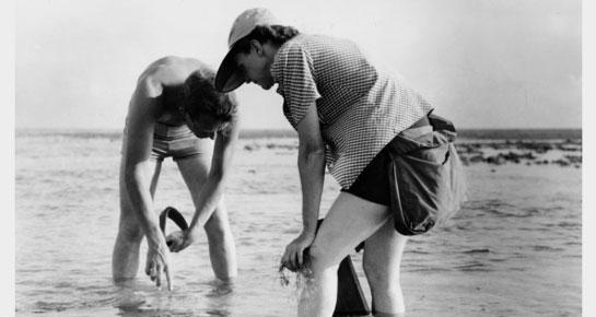 rachel carson the sunless sea essay