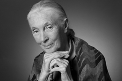 Jane Goodall, photo by Robin Holland