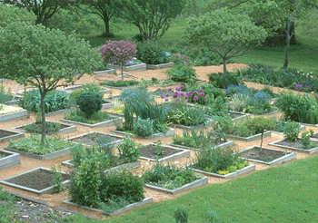The Perennial Gardener