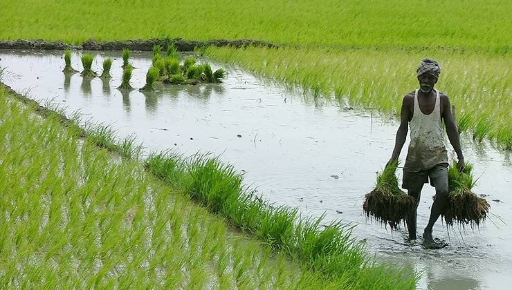 agriculture the story of india photo gallery pbs
