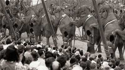 Watch The Circus American Experience Official Site Pbs