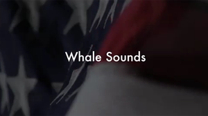 Whale Sounds poster image