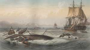 The History of Whaling in America poster image