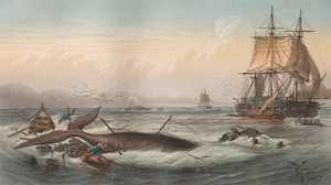 Effects of Offshore Whaling poster image