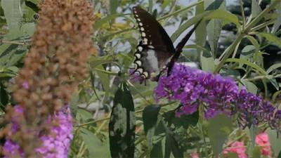 Cold War Butterflies poster image