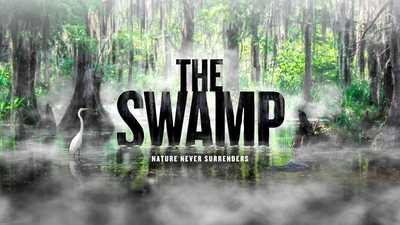 Now Streaming | The Swamp, Watch film poster image