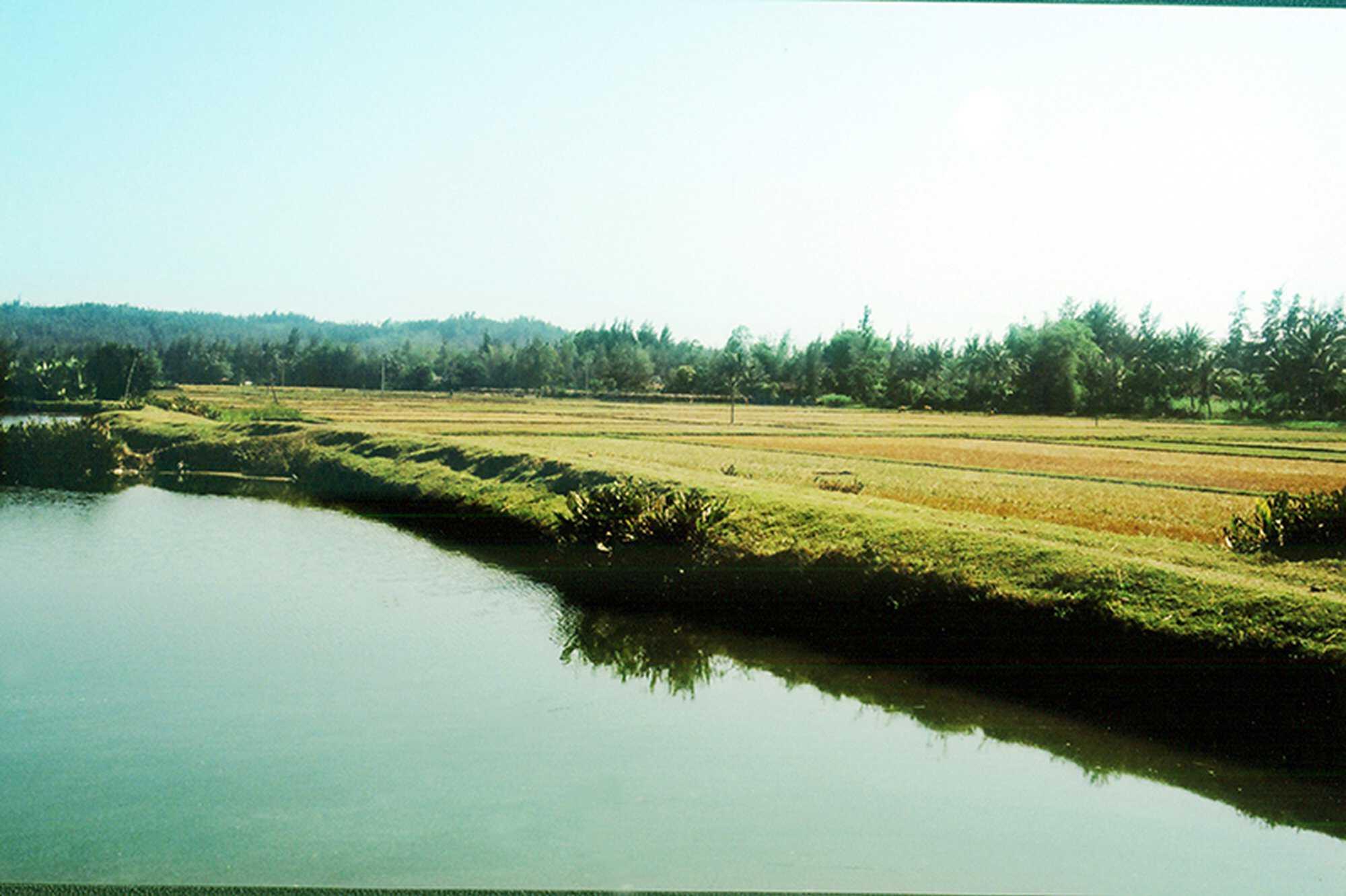 My Lai Timeline countryside 800.jpg